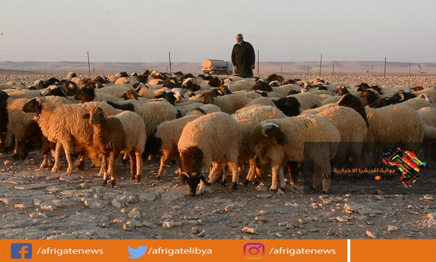 Agriculture Blog: دعم المواشي في الجزائر